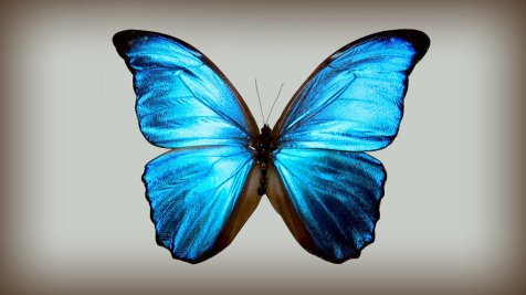 blue_butterfly_by_rana_rocks-d4grdbo