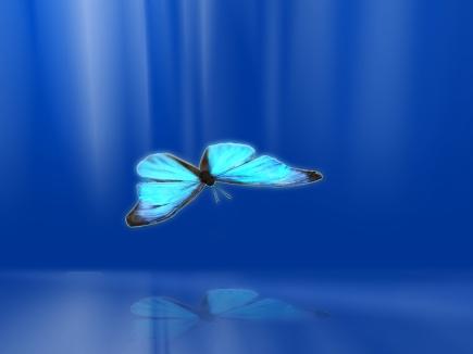 Goliath-Butterfly-butterflies-13005828-1024-768
